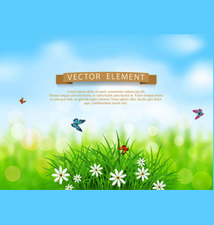 green grass with white flowers vector image