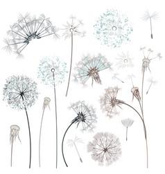 set hand drawn dandelions for design vector image