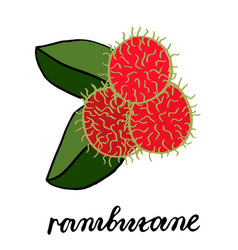 Three ripe red rambutan fruits with two green vector