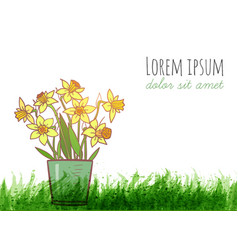 bouquet of yellow daffodiles and green grass vector image