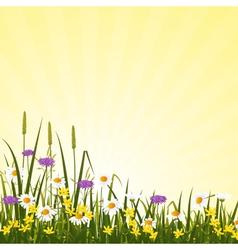 Wild flower meadow vector image vector image