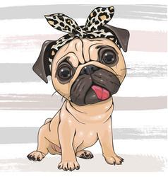 Cartoon pug dog girl with a bow isolated on a vector