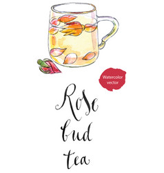 Cup of rose bud tea vector