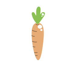 healthy carrot to vegan food and organic vector image