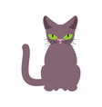 cat smoky isolated pet on white background vector image