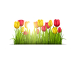 Green grass lawn with tulips and sunlight isolated vector image vector image