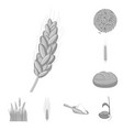 rye and plant logo set of vector image