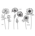 set rose poppy anemone flower and leaf hand vector image vector image