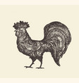 drawn rooster vintage sketch vector image
