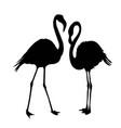 flamingo silhouette vector image
