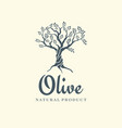 olive tree logo design template for oil vector image