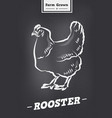 rooster vintage logo in retro style poster for vector image