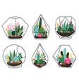 terrarium plants geometric succulent cactus vector image