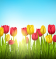 Green grass lawn with tulips and sunlight on sky vector image
