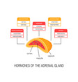 hormones of the adrenal gland diagram