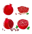 pomegranate fruits vector image