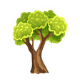 tree with green leafage abstract stylized tree vector image vector image
