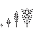 trees different ages vector image vector image