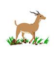 antelope cartoon vector image