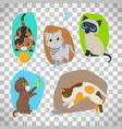 cute cats set on transparent background vector image vector image