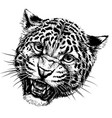 growling leopard graphic hand-drawn portrait vector image vector image
