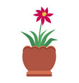 hibiscus with bright red blossom in big clay pot vector image