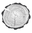 Annual tree growth rings with grayscale drawing of vector image