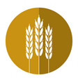 harvesting wheat ears shadow vector image