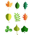 various leaves vector image