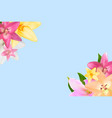 with lily flowers isolated on vector image