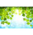 Green leaves on branches vector image vector image
