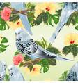 seamless texture birds budgerigars vector image vector image