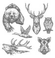 wild hunting animals and birds sketches vector image vector image