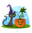 halloween black cat with evil pumpkin vector image