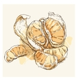 Mandarin hand drawing vector image vector image