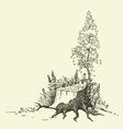 birch tree around stump vector image