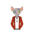 cute fashion sphinx cat guy character dressed up vector image
