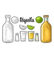 glass and botlle tequila cactus salt lime vector image vector image
