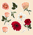 set roses and spring flowers elements vector image