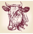 cow hand drawn llustration vector image vector image