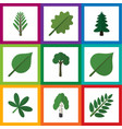 flat icon bio set of acacia leaf park timber and vector image vector image