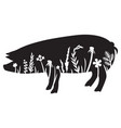 floral pig - grass silhouette flowers and plants vector image