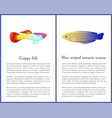 guppy fish and blue striped tamarin wrasse icons vector image