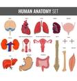 Human internal organs Anatomy set icons vector image vector image