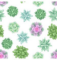 seamless pattern with succulents echeveria jade vector image vector image