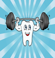 Cartoon Tooth Character Lifting Weights vector image vector image