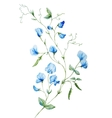 Nice watercolor flowers vector image vector image