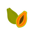 ripe papaya cross section half and whole exotic vector image
