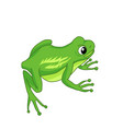 A sitting green frog on a white background