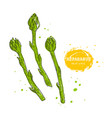 asparagus hand drawn in the vector image vector image